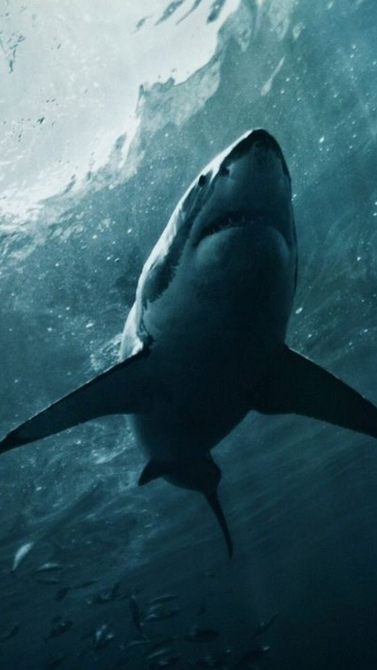 shark wallpaper 35