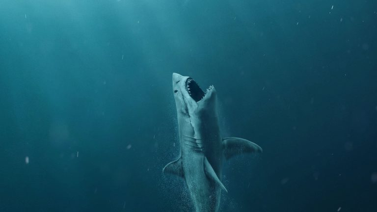 shark wallpaper 44