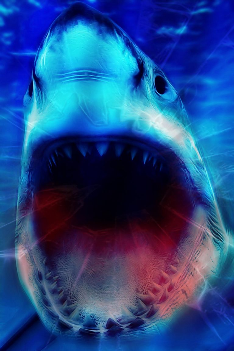 shark wallpaper 52