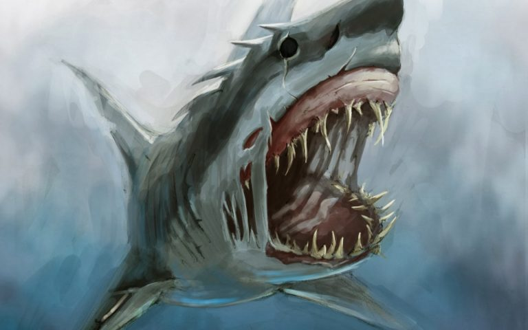shark wallpaper 76