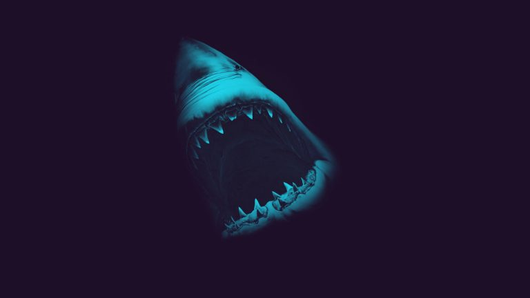 shark wallpaper 92