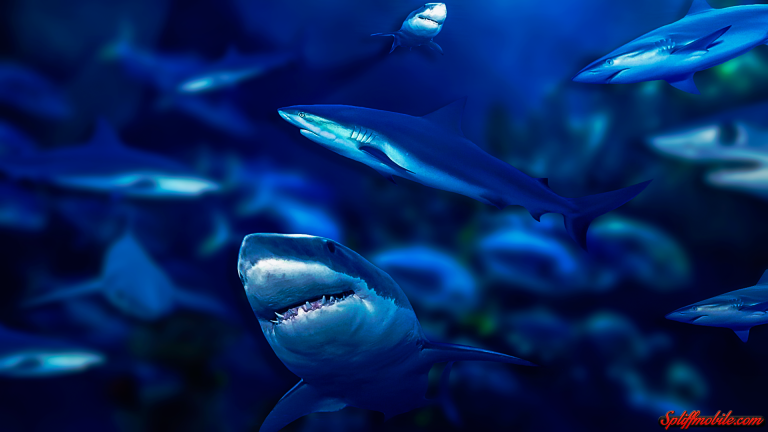 shark wallpaper 119