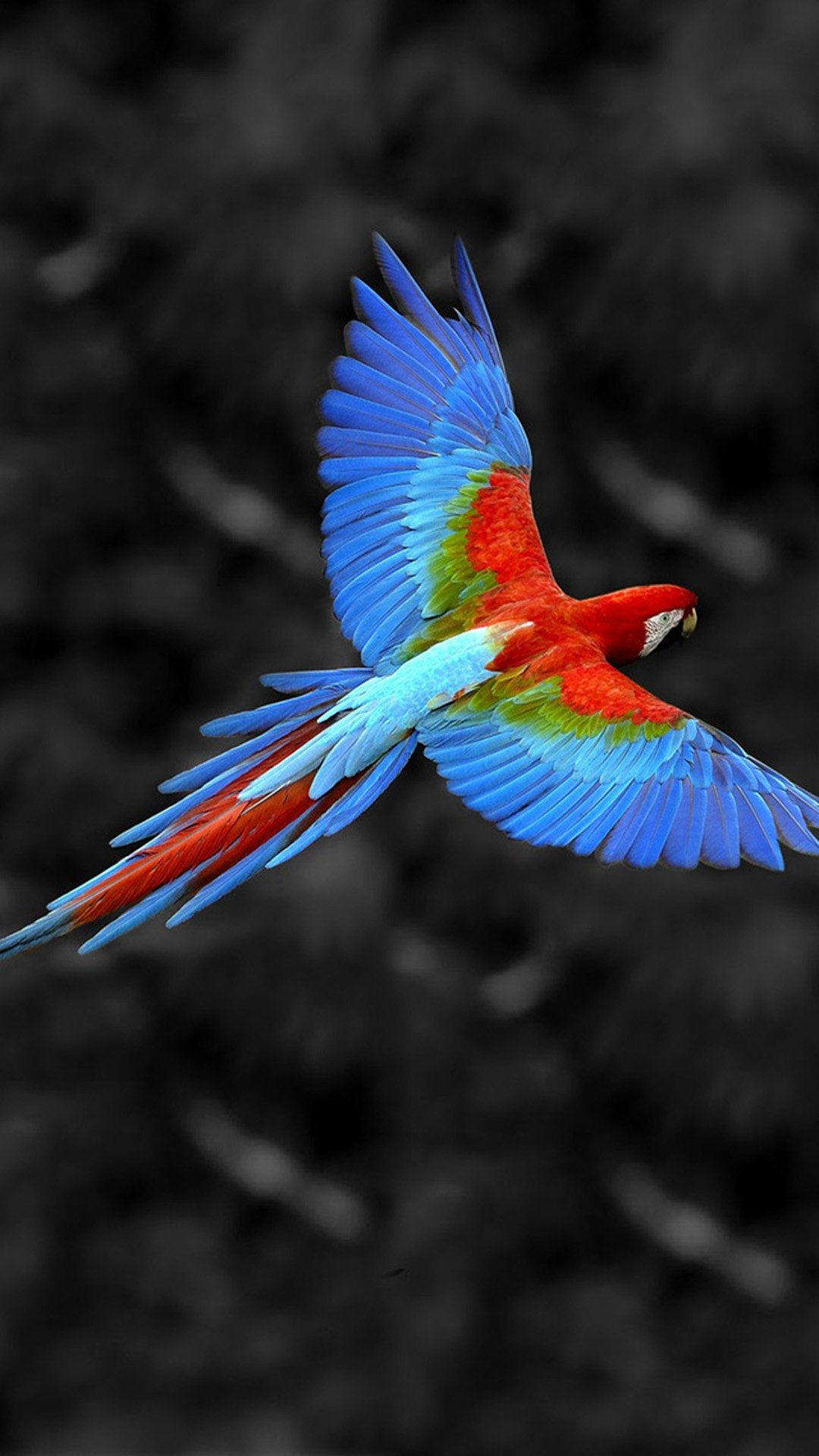 Bird Wallpaper 100 1080x1920 Pixel Wallpaperpass