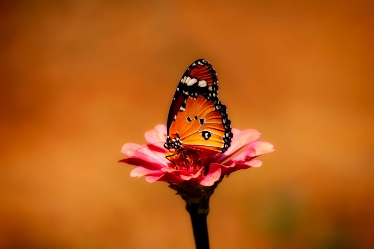 butterfly wallpaper 143