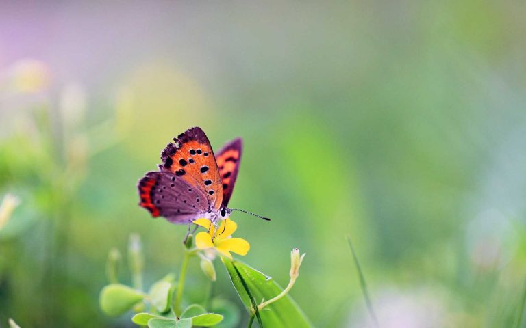 butterfly wallpaper 144