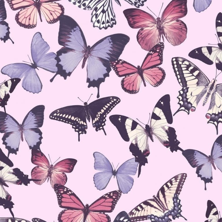 butterfly wallpaper 146