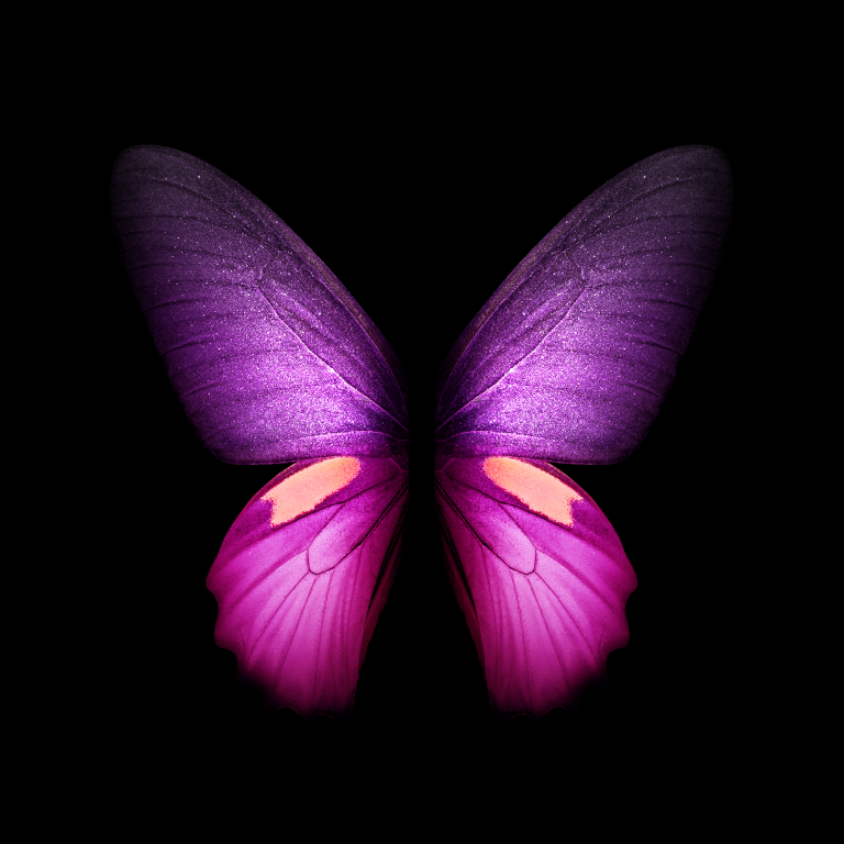 butterfly wallpaper 156