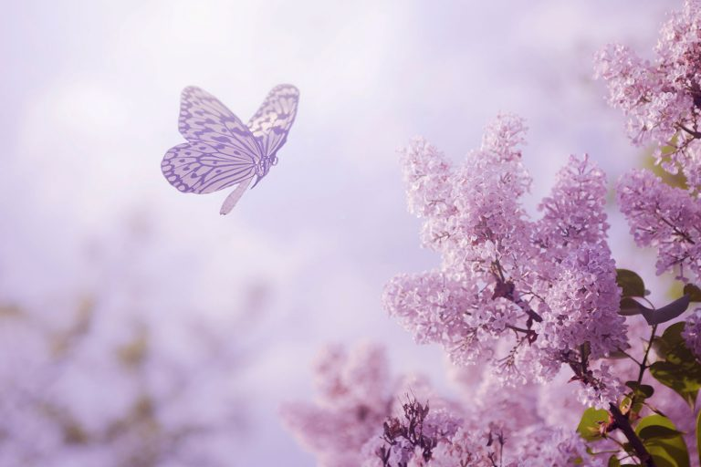 butterfly wallpaper 158