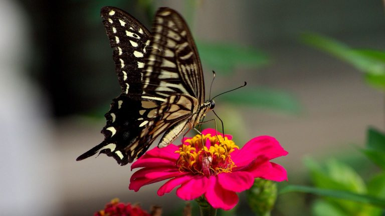 butterfly wallpaper 159
