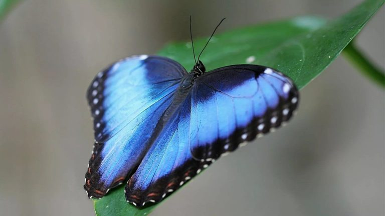 butterfly wallpaper 163