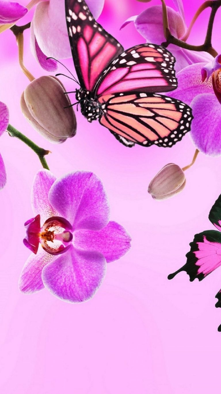 butterfly wallpaper 170