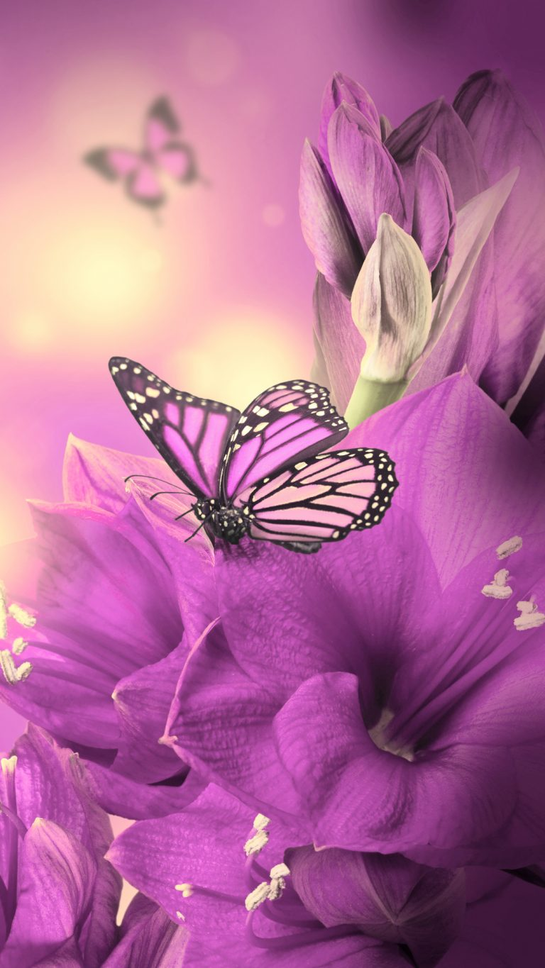 butterfly wallpaper 174