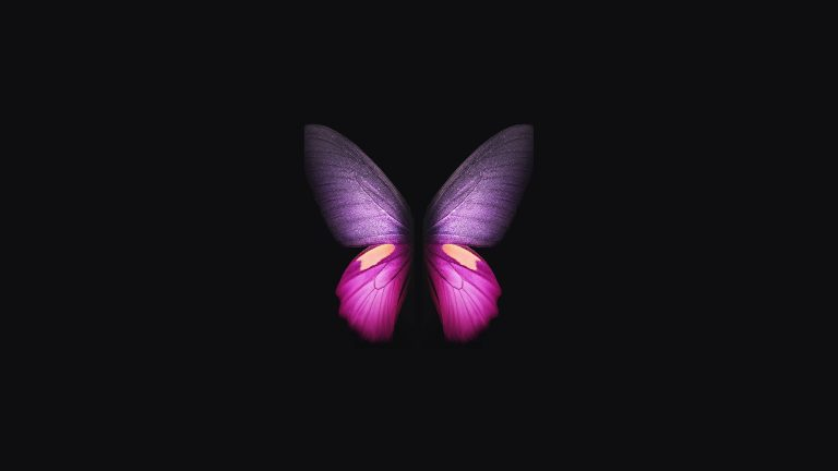 butterfly wallpaper 179