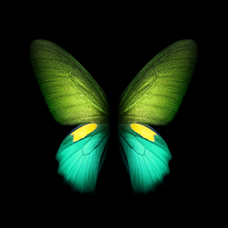 butterfly wallpaper 181