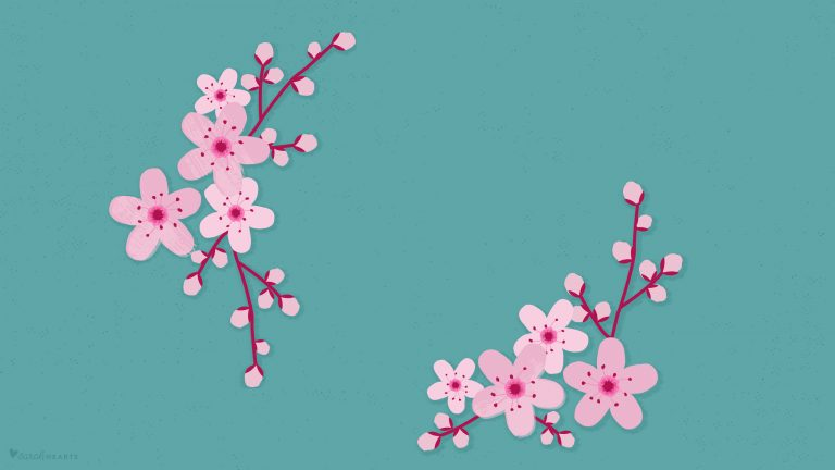 cherry blossom wallpaper 1