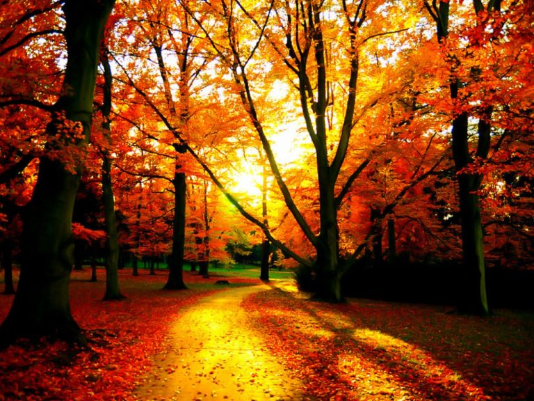 fall wallpaper 140