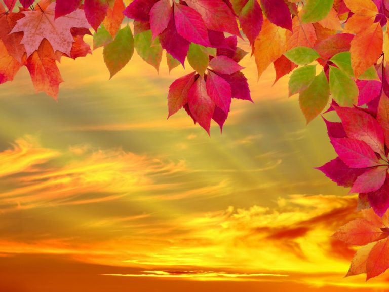fall wallpaper 142