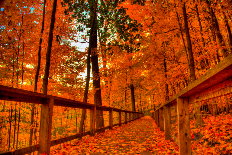 fall wallpaper 143