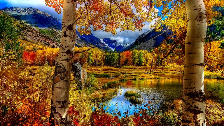 fall wallpaper 144