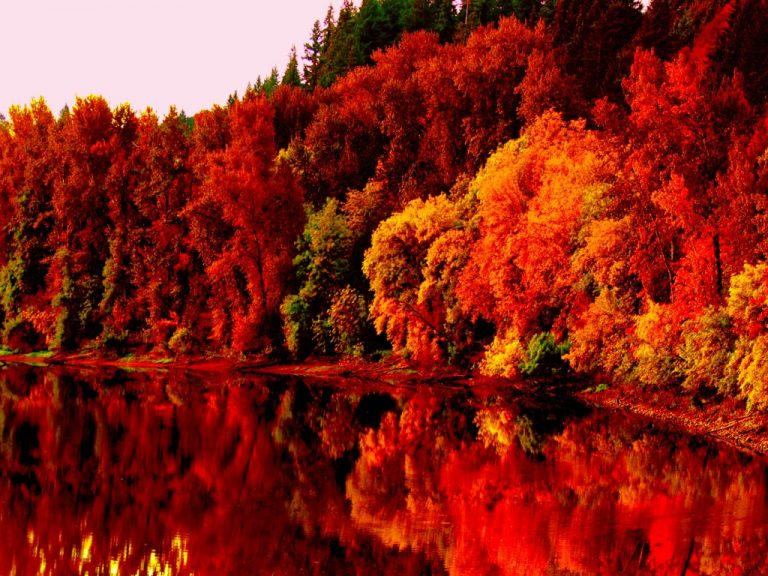 fall wallpaper 146