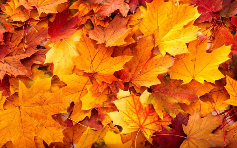 fall wallpaper 147
