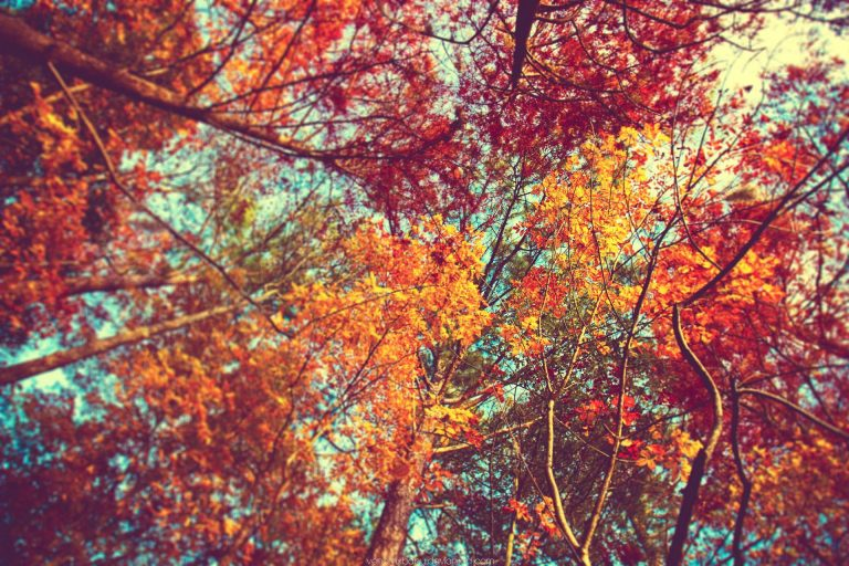 fall wallpaper 148