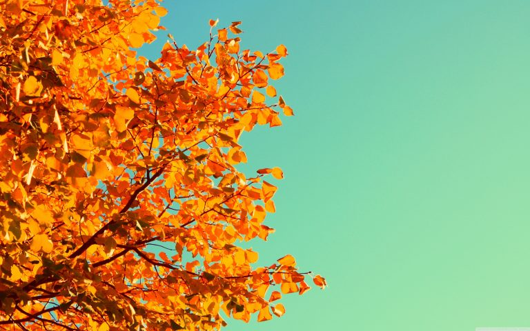 fall wallpaper 151