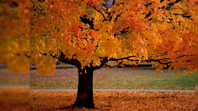 fall wallpaper 152