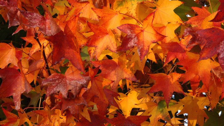 fall wallpaper 154