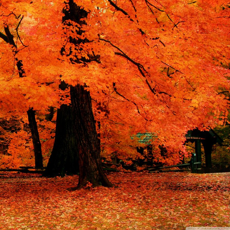 fall wallpaper 169