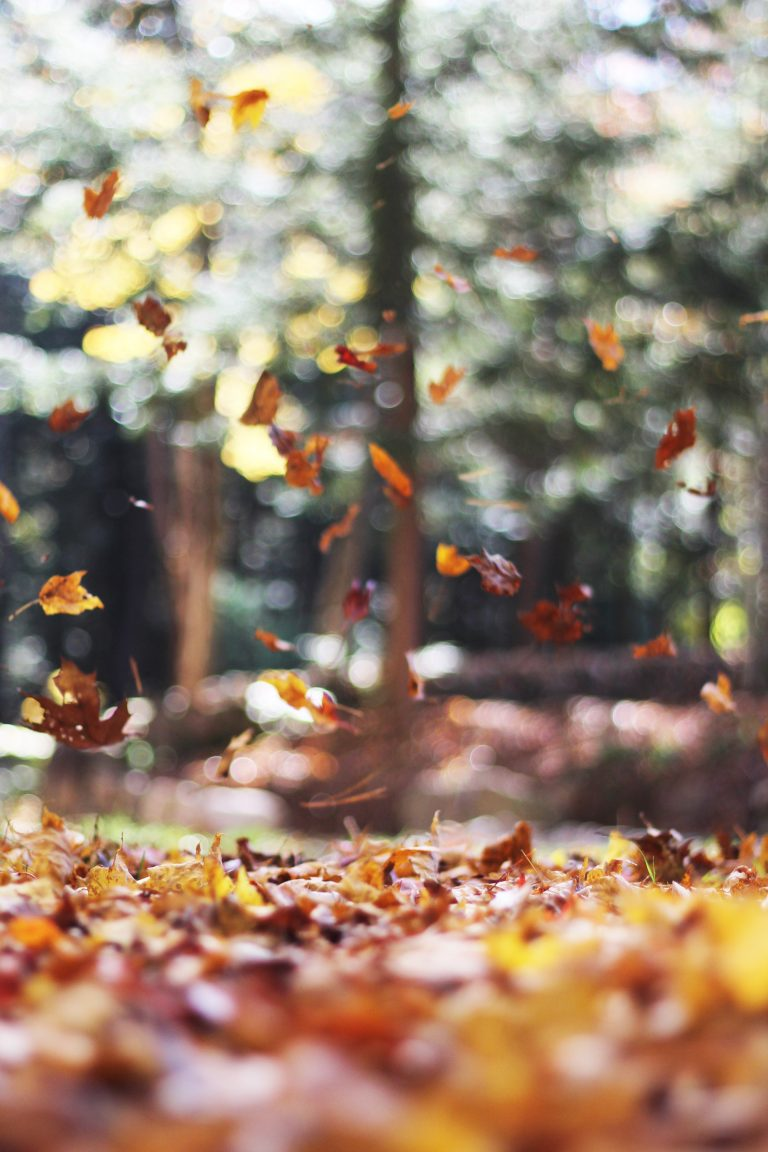 fall wallpaper 172