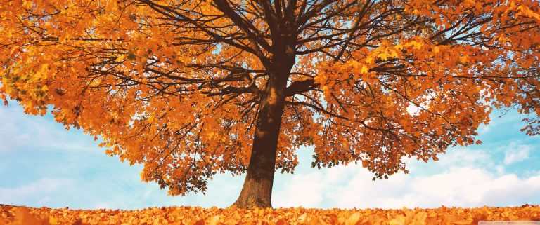 fall wallpaper 179