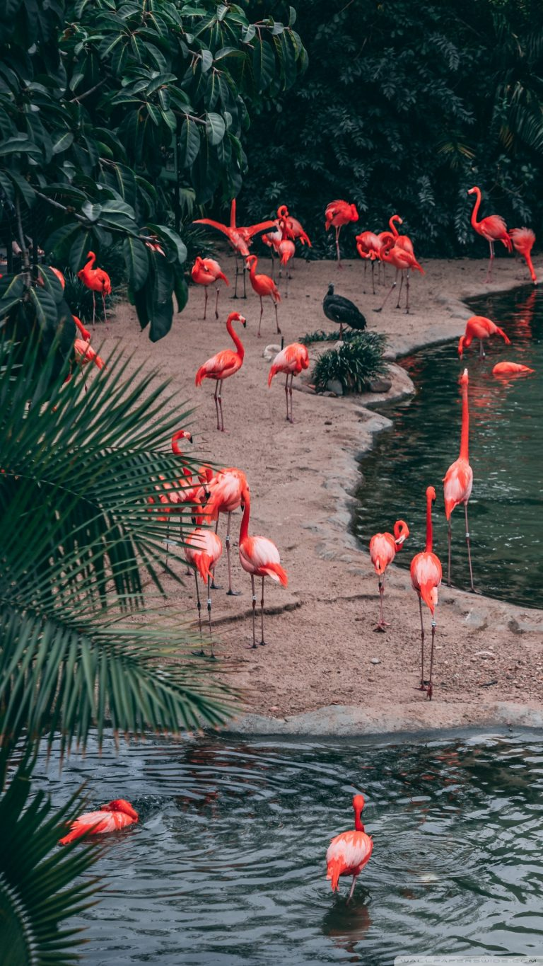 flamingo wallpaper 27