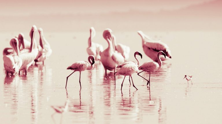 flamingo wallpaper 32