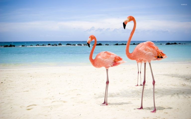flamingo wallpaper 43