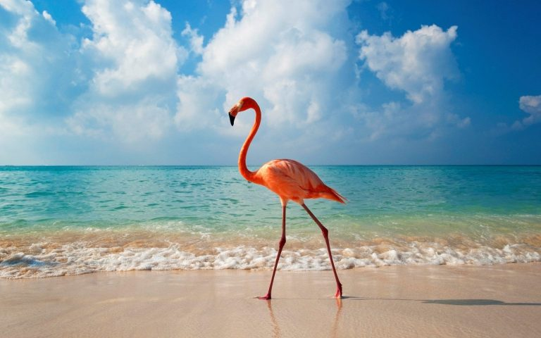 flamingo wallpaper 55