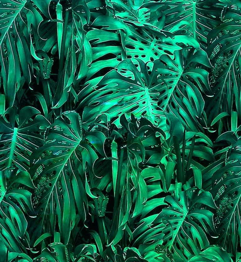jungle wallpaper 117