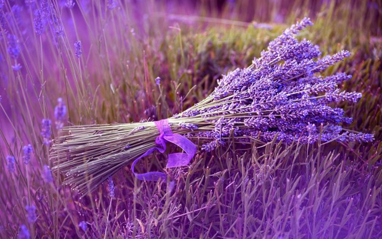lavender wallpaper 5
