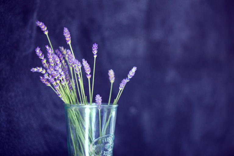 lavender wallpaper 14