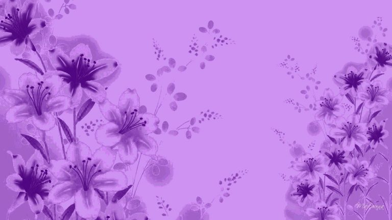 lavender wallpaper 15