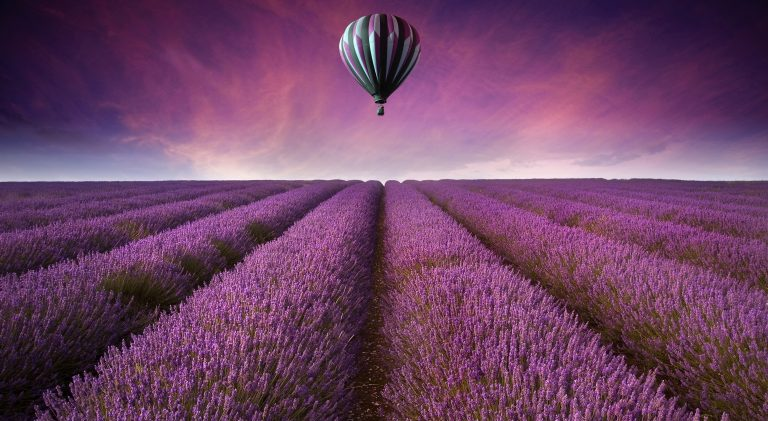 lavender wallpaper 28