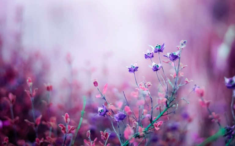 lavender wallpaper 33