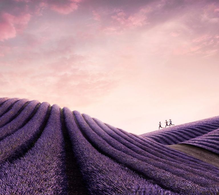 lavender wallpaper 49