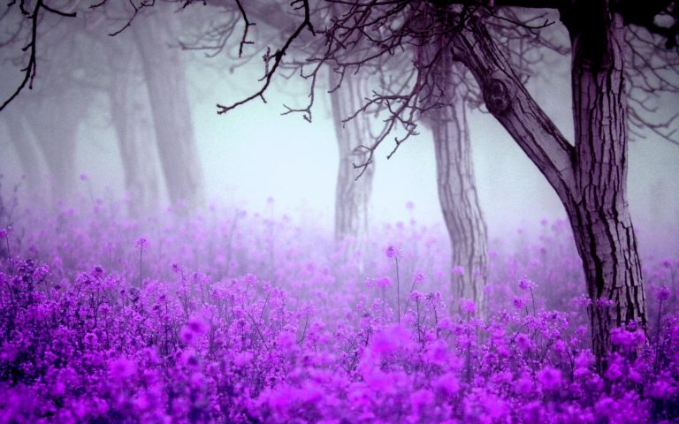 lavender wallpaper 51