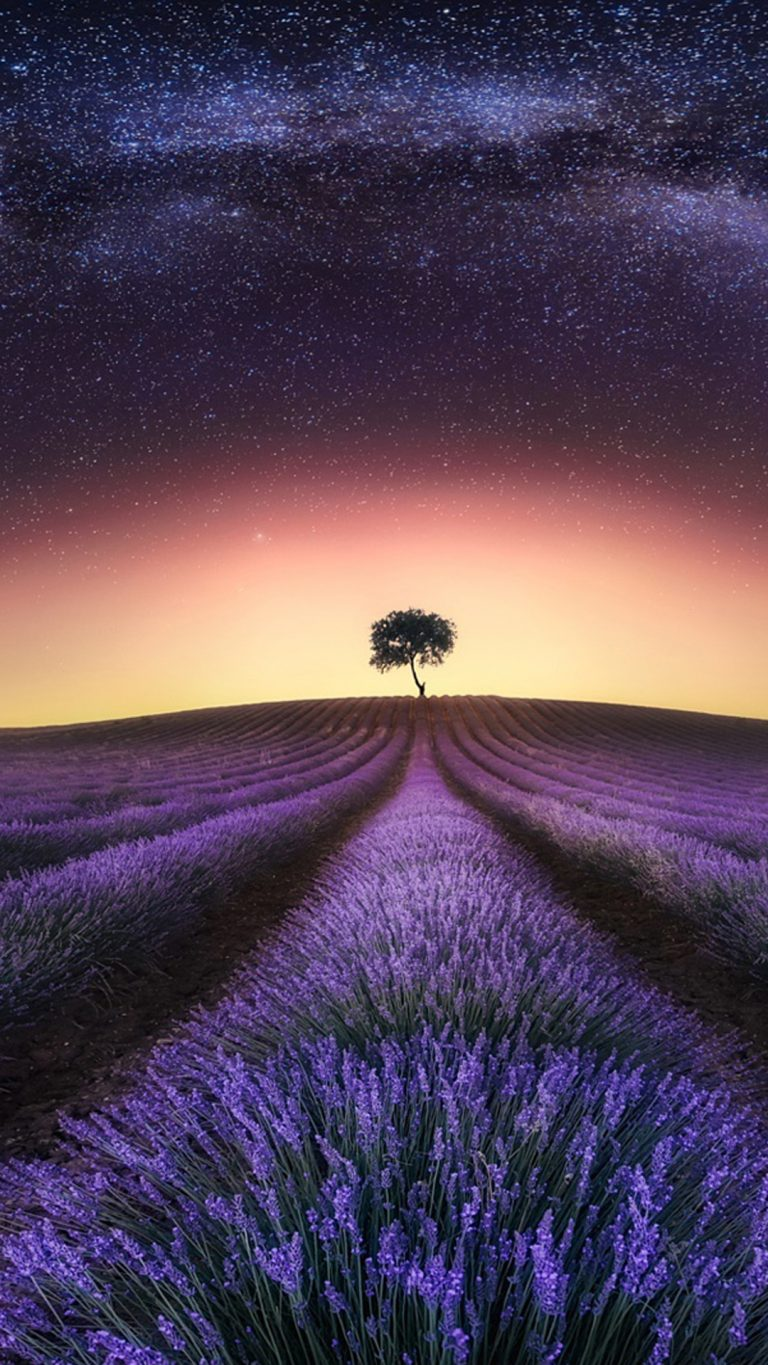 lavender wallpaper 61