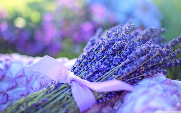 lavender wallpaper 63