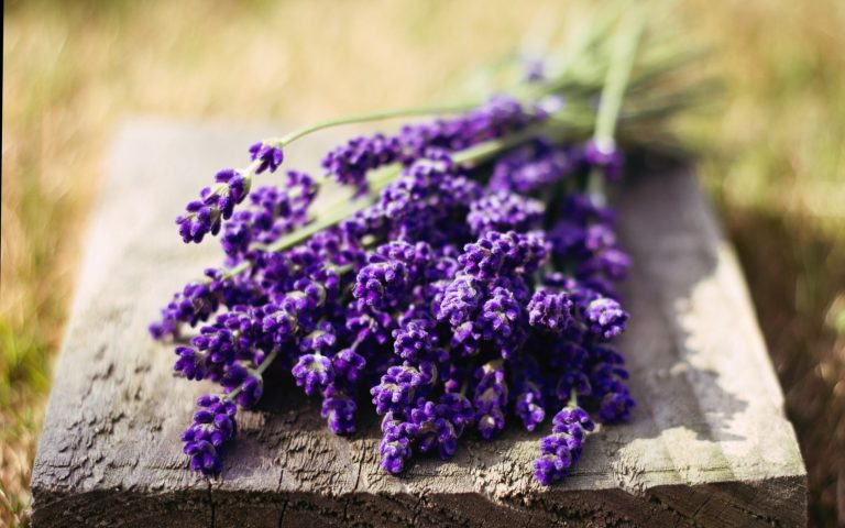 lavender wallpaper 81
