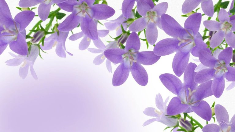 lavender wallpaper 95