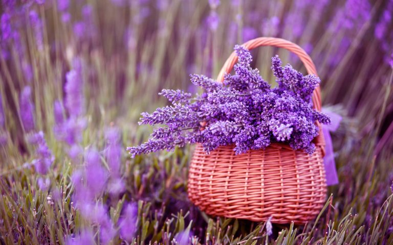 lavender wallpaper 103