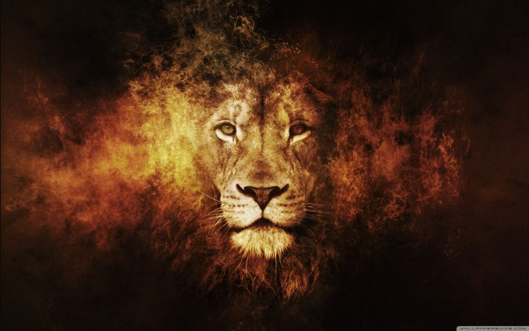 lion wallpaper 21